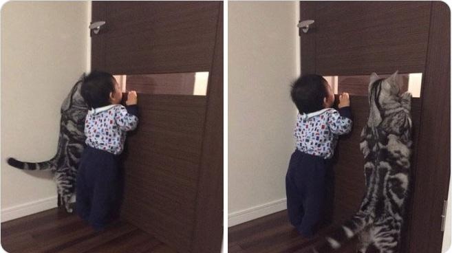 полосатый кот и мальчик выглядывают в дверь