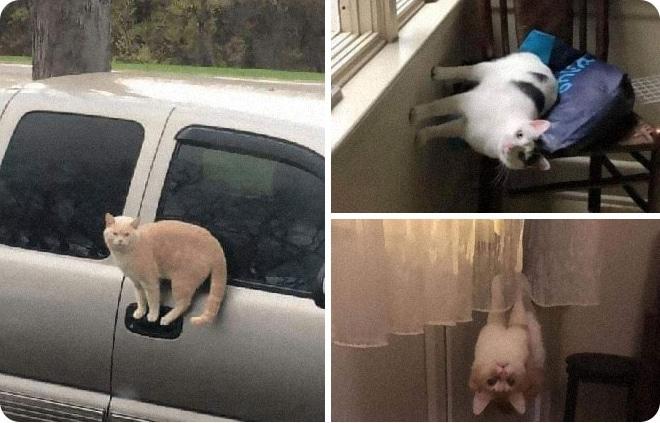 15 забавных причин, по которым каждому из вас нужен кот ShouldHaveCatTwitterИ, которым, умеют, любят, похожи, причин, стоит, которые, часто, очень, завести, можно, когда, котов, бесконечно©, ShouldHaveCatTwitterНу, любоваться, Помните, разве, поесть