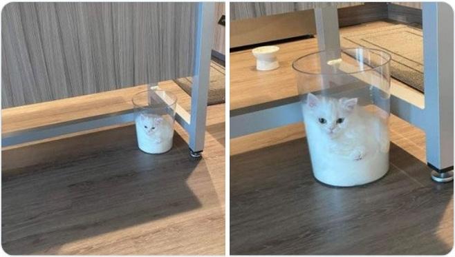 белый котенок сидит в стеклянной вазе