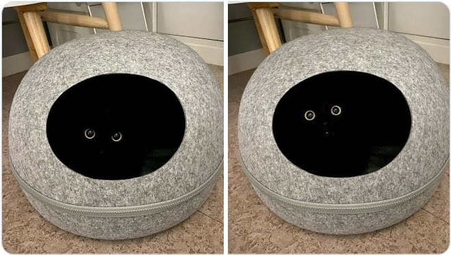 черный кот лежит в домике