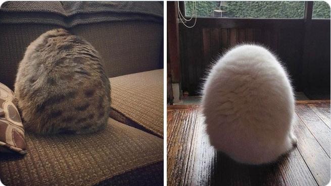 коты сидят так, что не видно головы