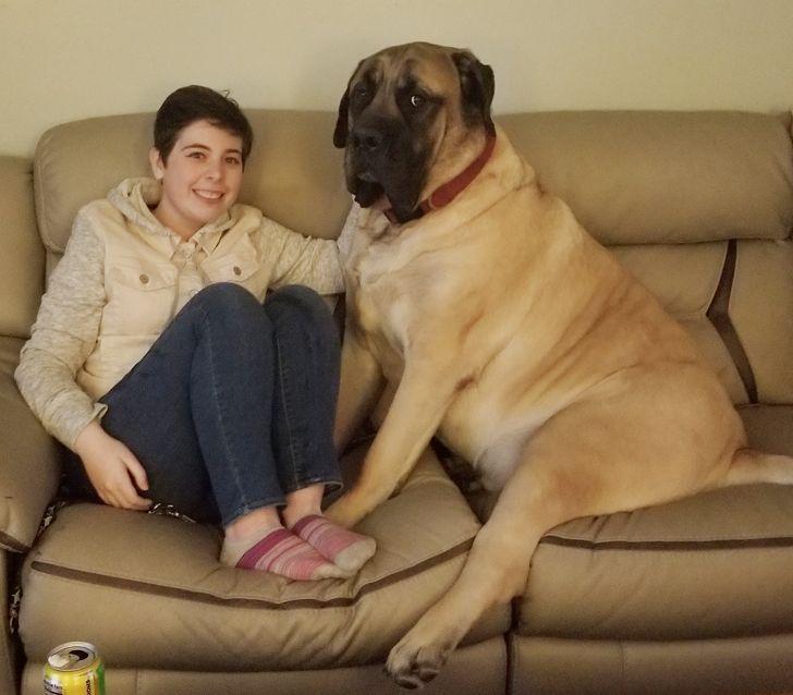 девушка сидит на диване с большим псом