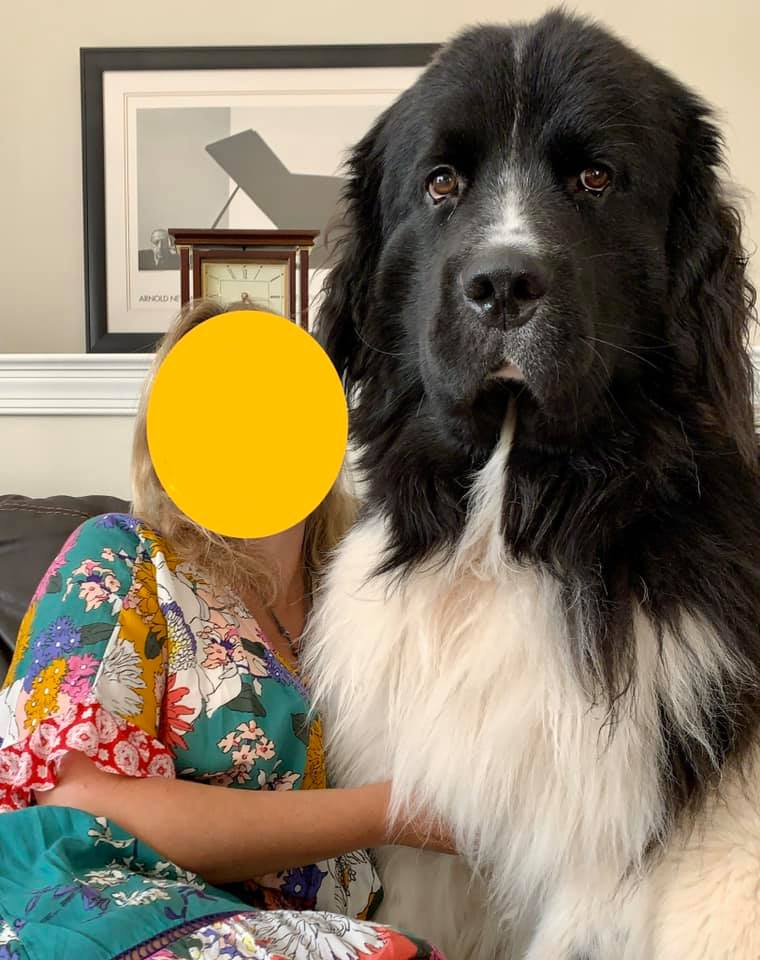 женщина с собакой породы ньюфаундленд
