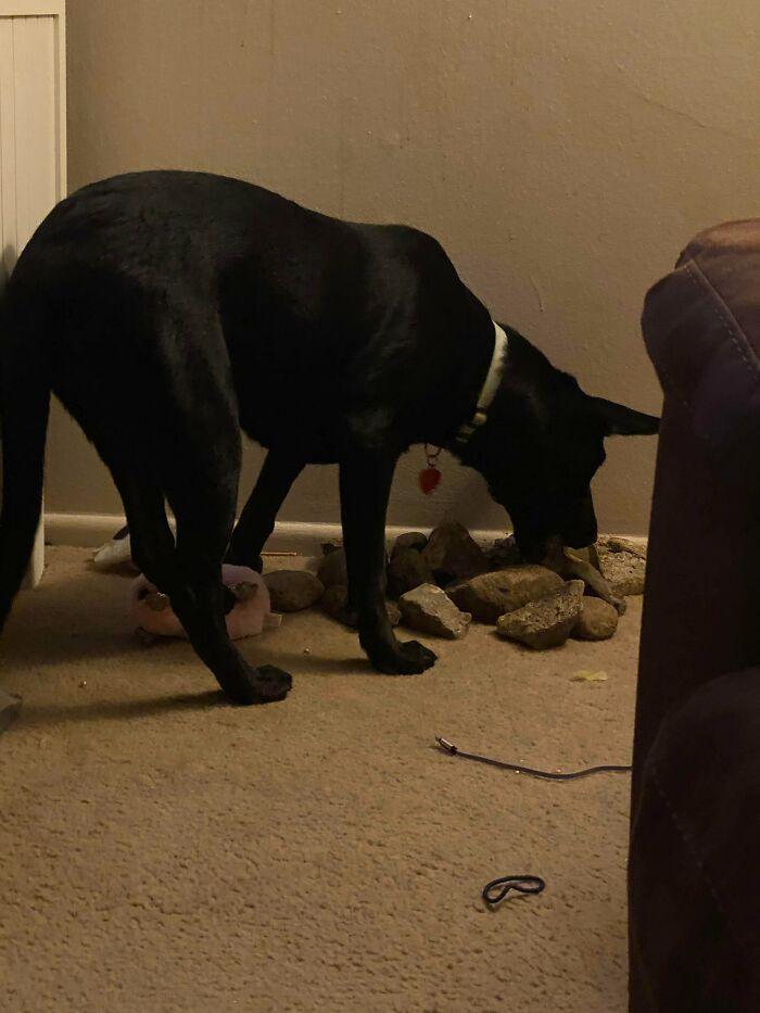черная собака с камнями