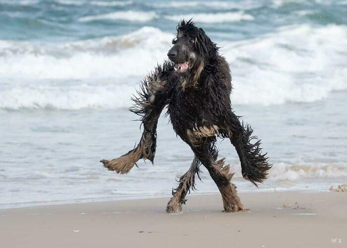 черный пес на пляже