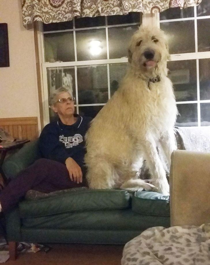 белый пес сидит рядом с пожилой женщиной на диване