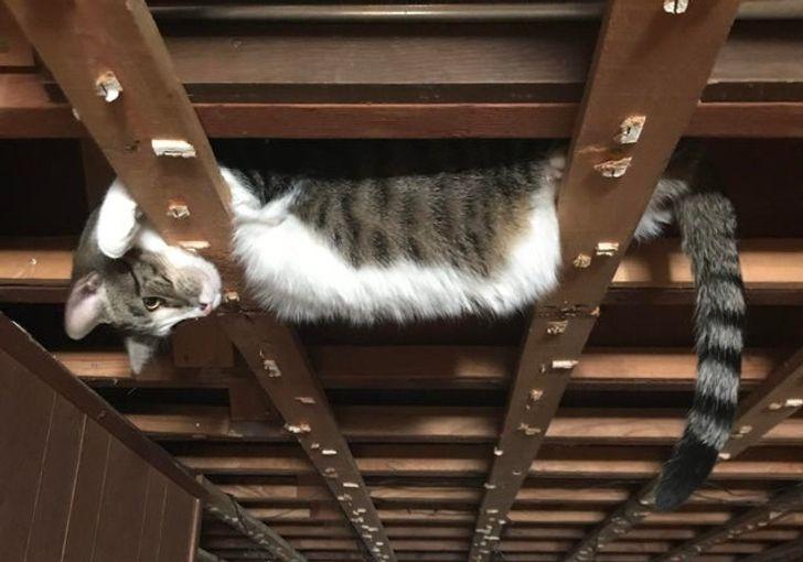 11 котов, которые ведут себя так, будто они пришельцы с другой планеты