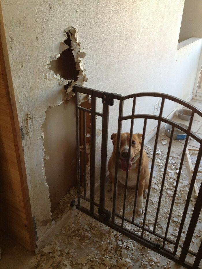 собака сидит за металлической оградой