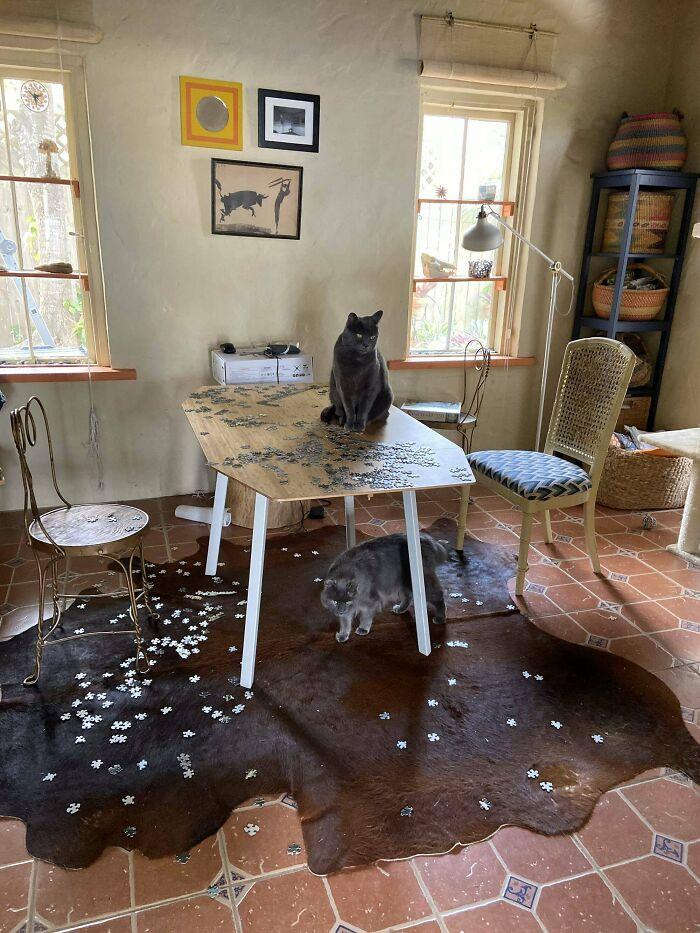 два кота скинули со стола пазлы