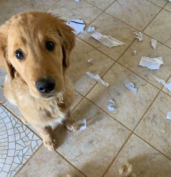 рыжая собака и порванные квитанции