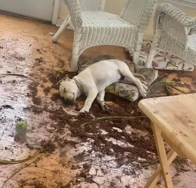 собака спит на рассыпанной по полу земле