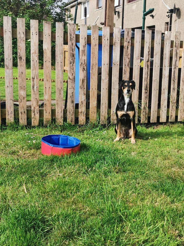 пес сидит на газоне рядом с забором