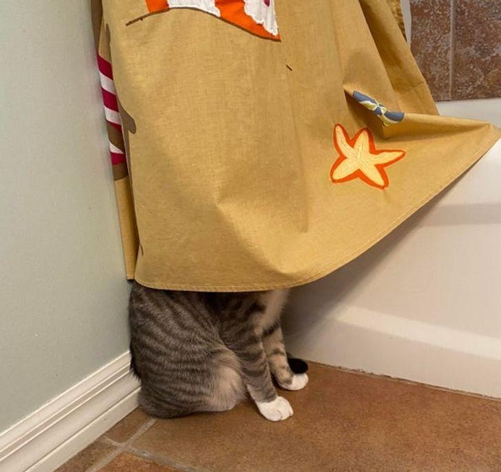 11 котов, которые ведут себя так, будто они пришельцы с другой планеты будто, ведут, котов, которые, другой, наказали, выглядит, кошку, стороны, первым, JaySenpaiiRedditСо, стену©, уставившись, сидеть, привычка, открывать9, сделала©, котами, sambinaryRedditБежит, нравится