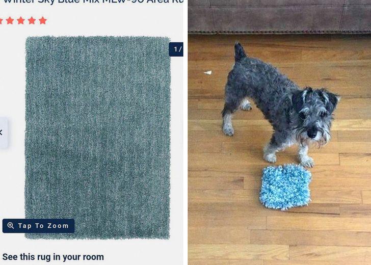 собака и крошечный коврик