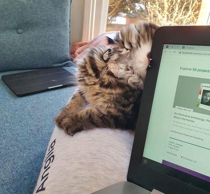 кошка кусает край ноутбука