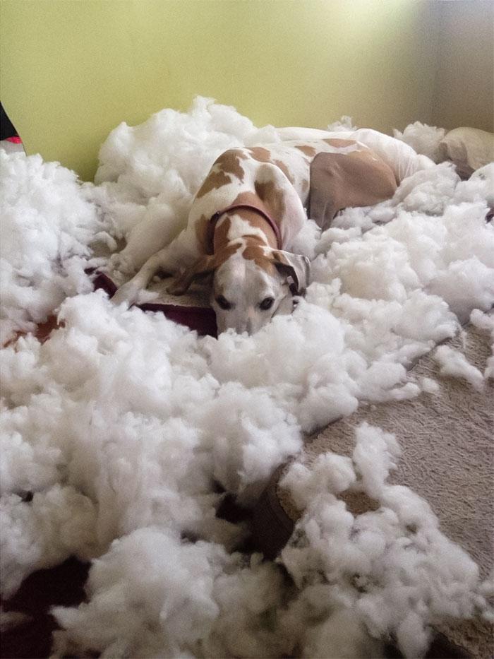 собака лежит посреди ваты