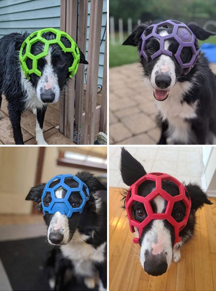 собака с кусками мяча на голове