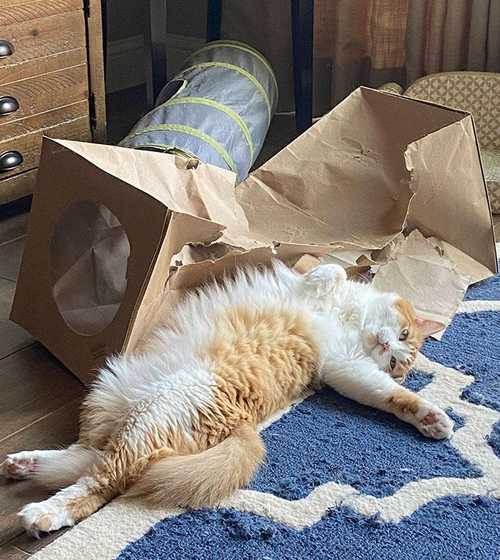 рыже-белый кот лежит возле помятой коробки