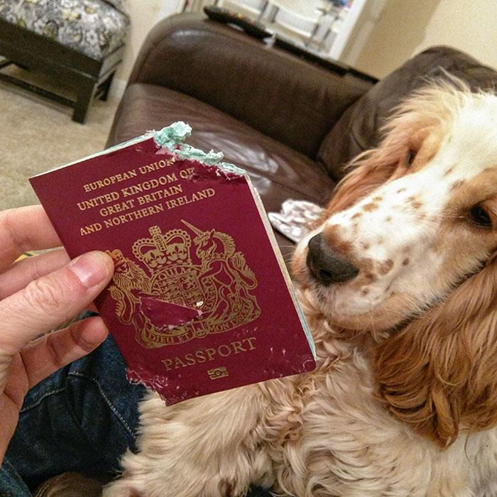 собака и пожеванный паспорт