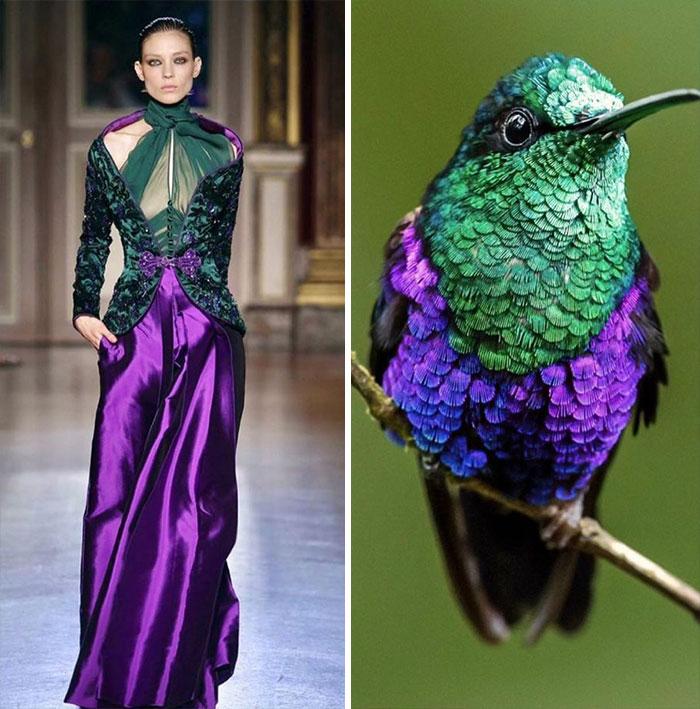 20 доказательств того, что все, что изобретают дизайнеры одежды, уже давно придумано природой