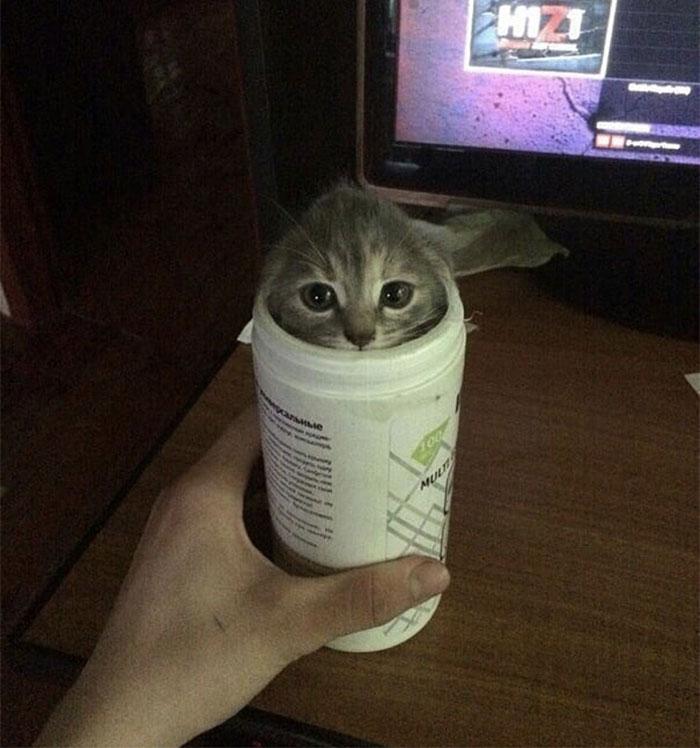 котенок сидит в пластмассовой банке