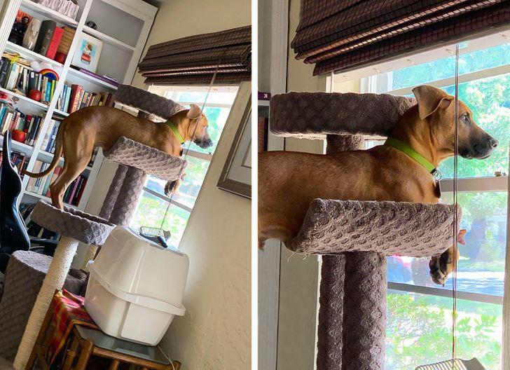 рыжая собака сидит на кошачьем домике