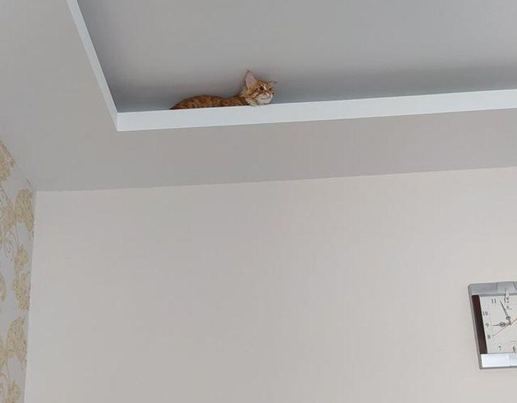 рыжий кот сидит под потолком