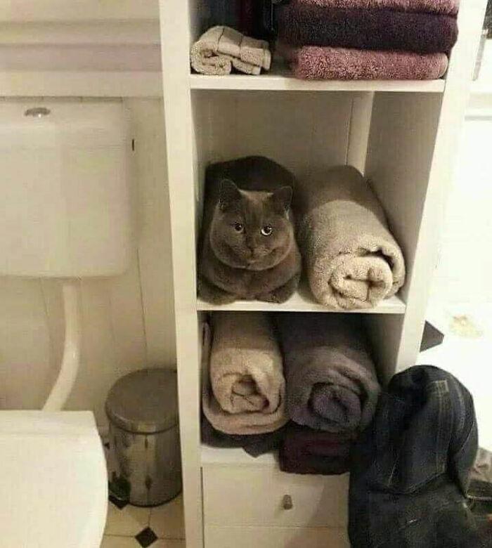 серый кот сидит на полке с полотенцами