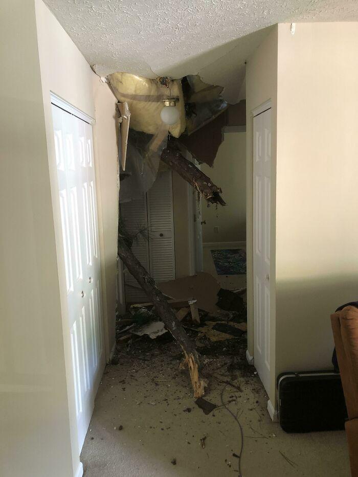 дерево пробило стену в квартире