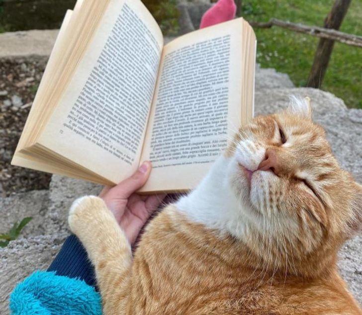 рыжий кот и книжка