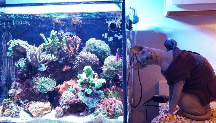 кот сидит рядом с аквариумом