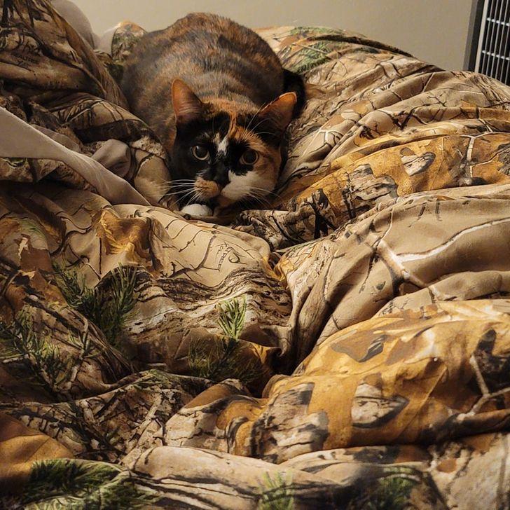 трехцветная кошка на одеяле