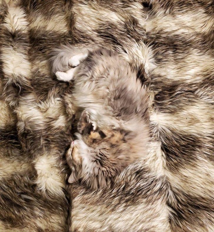 кошка спит на одеяле