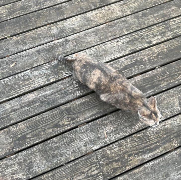 серый кот идет по палубе