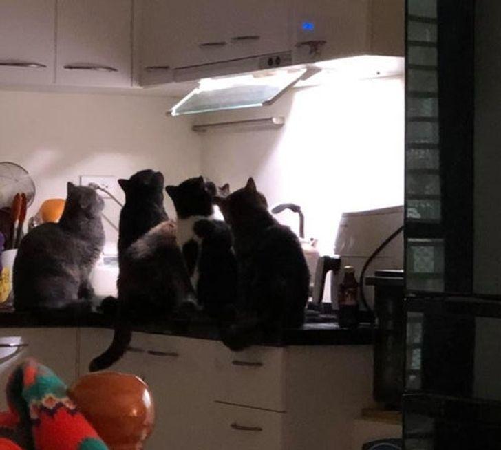 коты сидят на столе в кухне