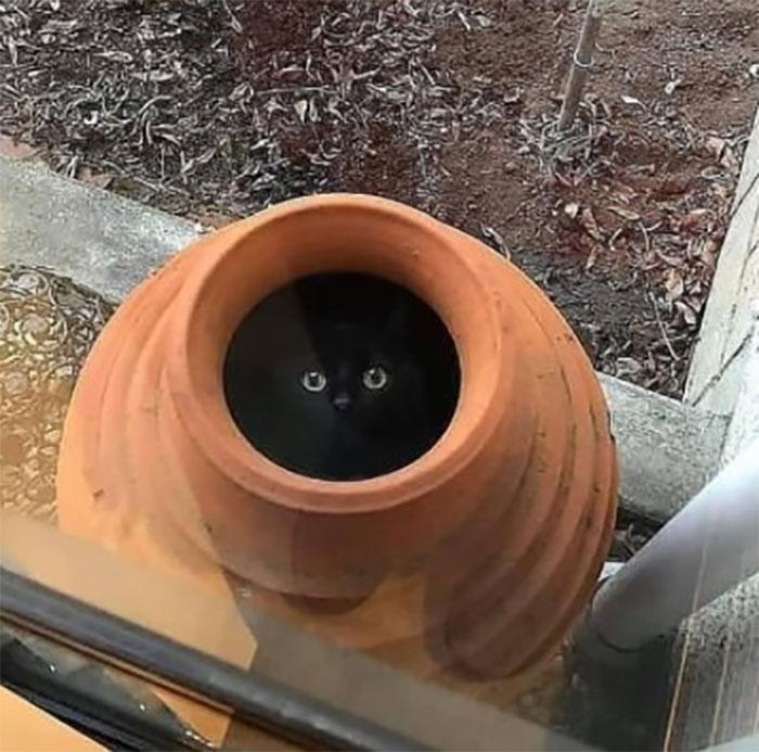 черный котенок сидит в глиняной вазе