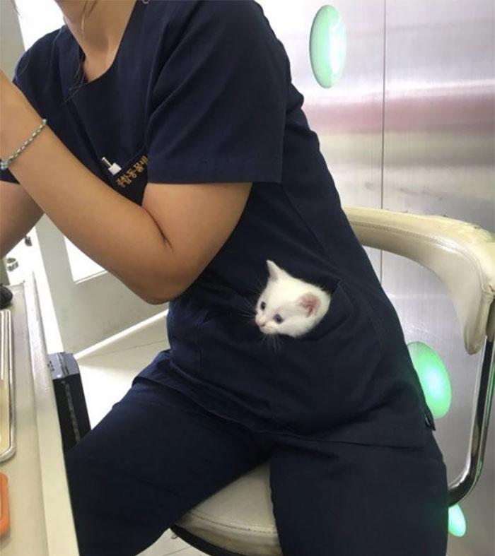 белый котенок сидит в кармане