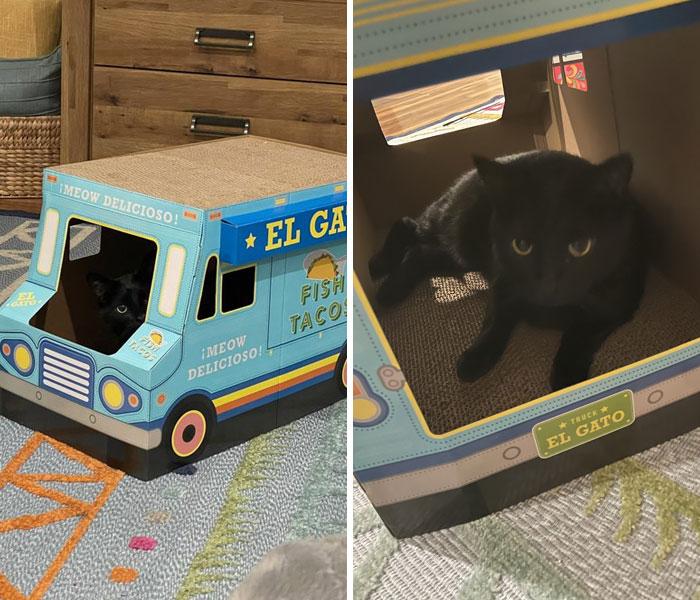черный кот сидит в коробке-машине