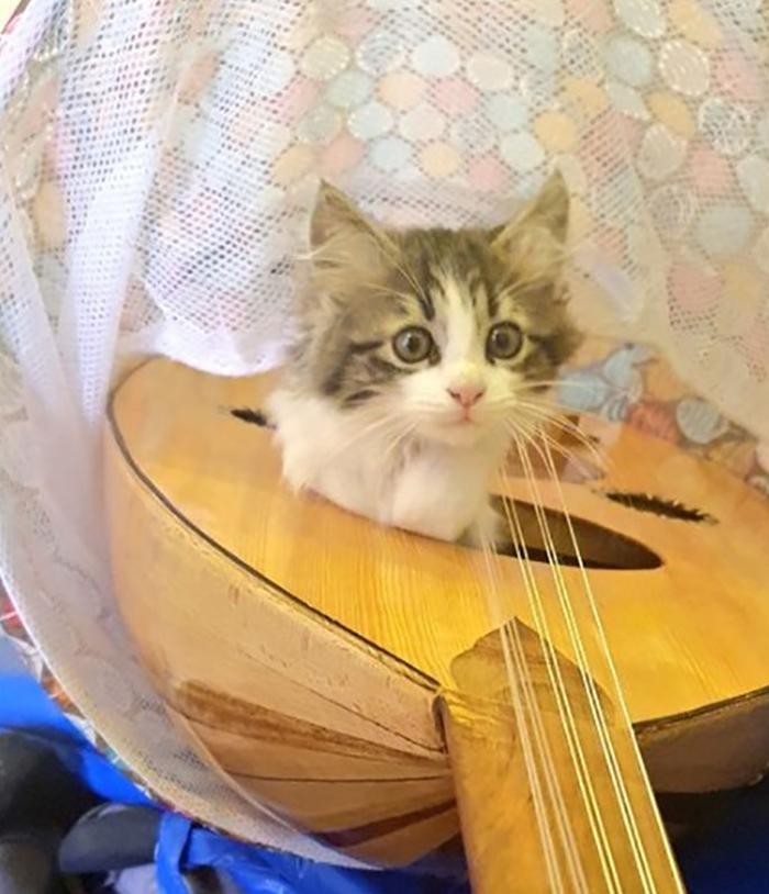 кот сидит в гитаре