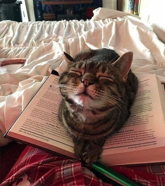 кот спит на открытой книге