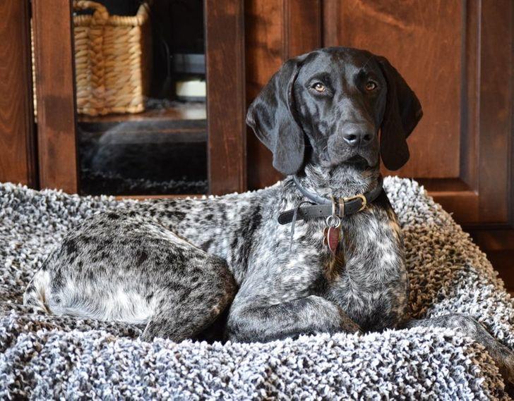 собака сидит на серой подстилке