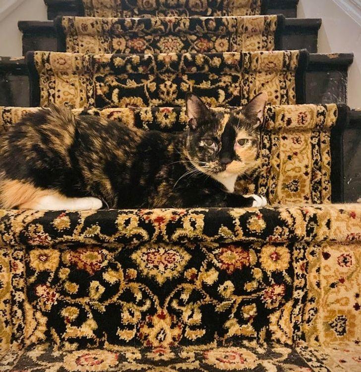 кошка на ступеньках
