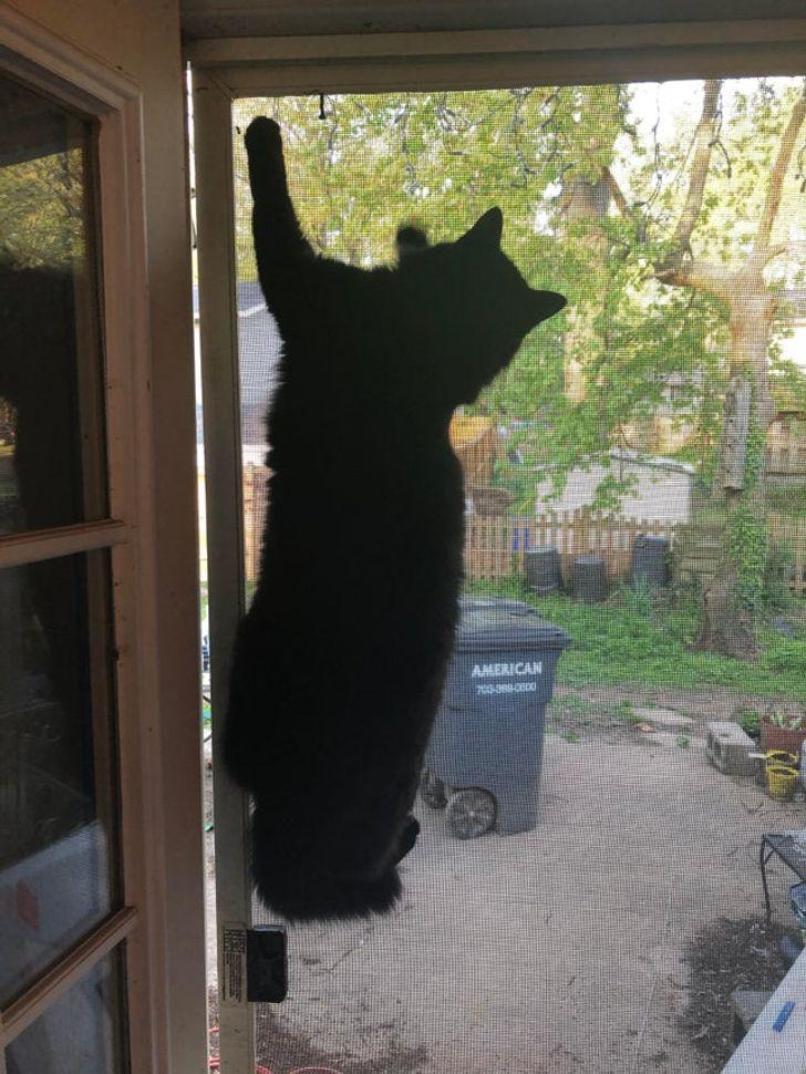 кот висит на сетке на двери