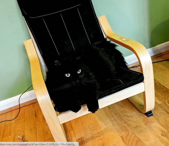 черный кот сидит на черном стуле