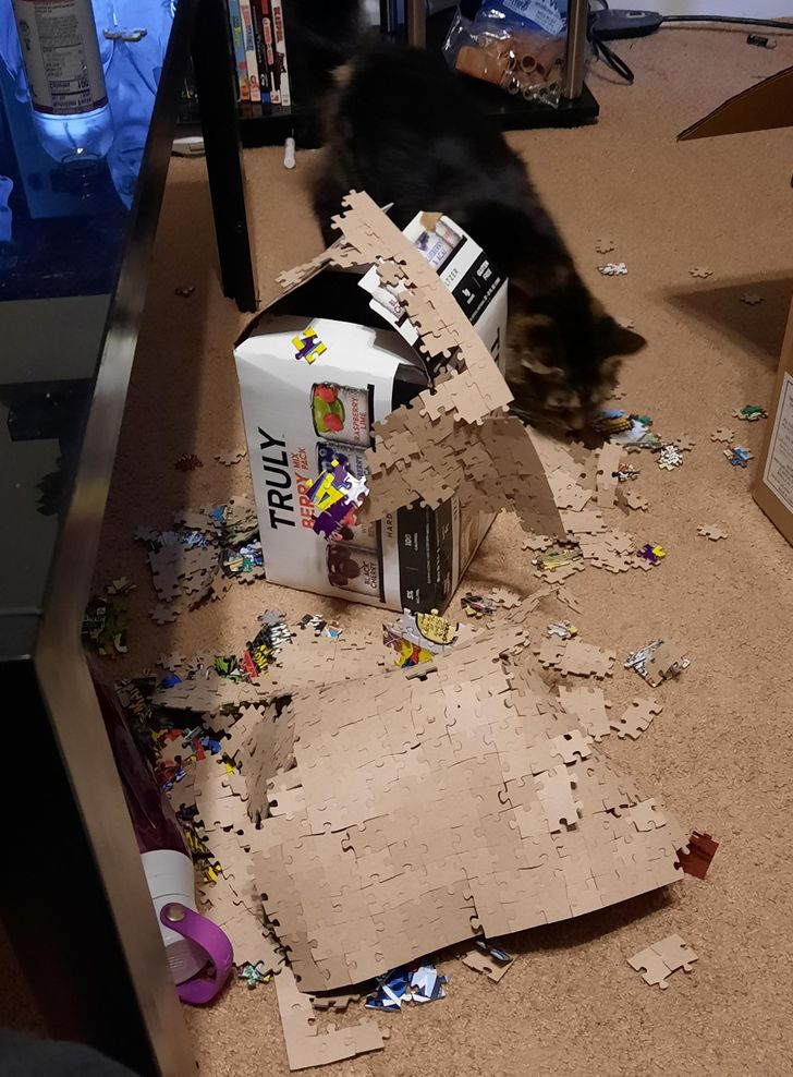 кошка перевернула пазлы со стола