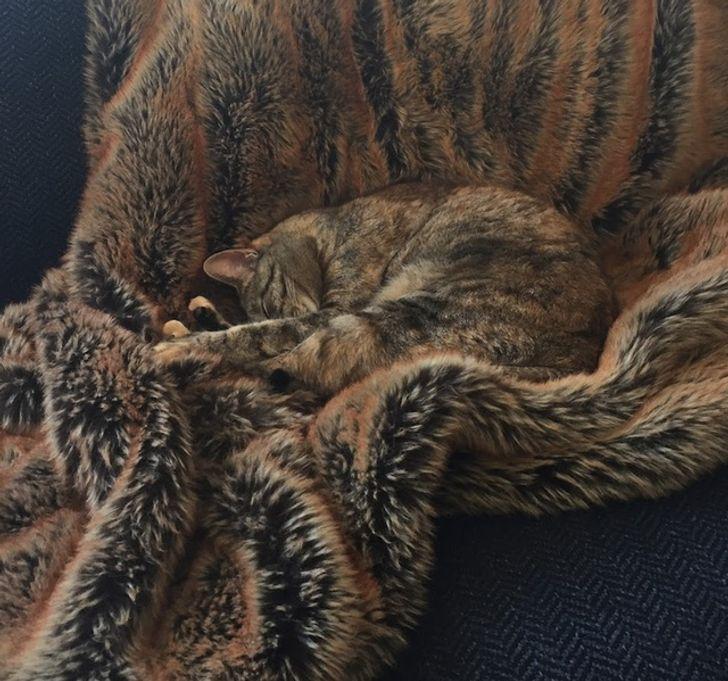 кот спит на пушистом одеяле