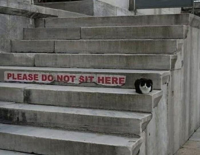 черно-белый кот сидит на ступеньках