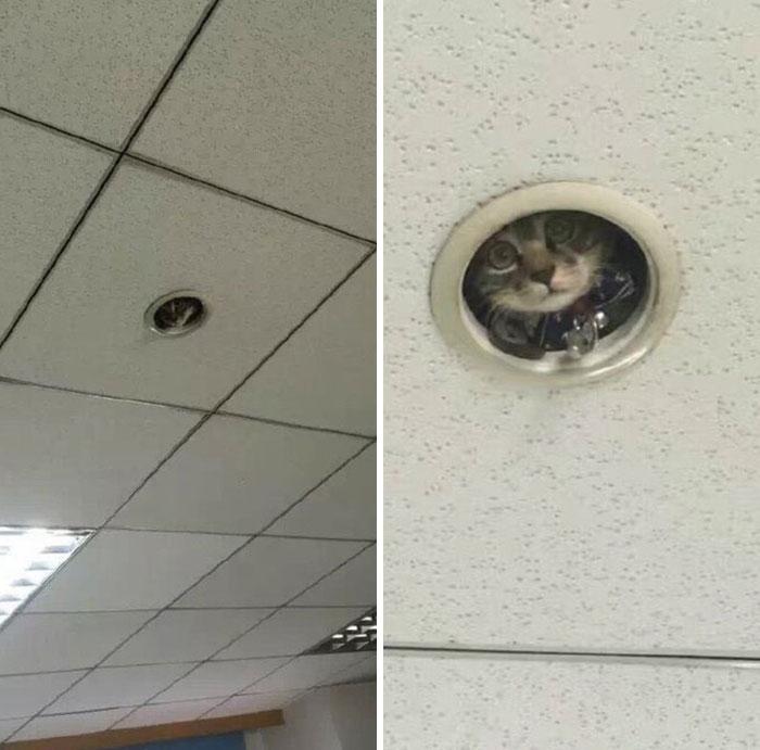кошка в потолке