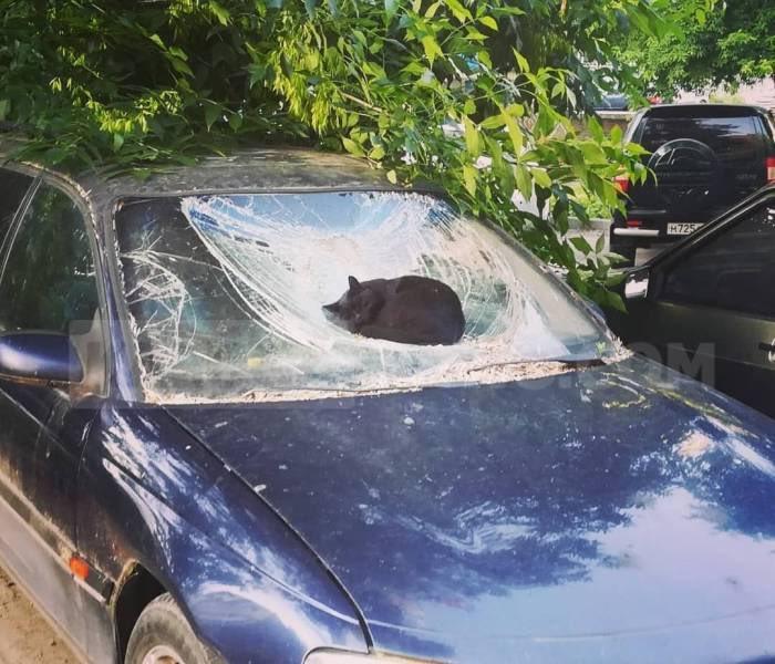 черный кот спит на разбитом лобовом стекле