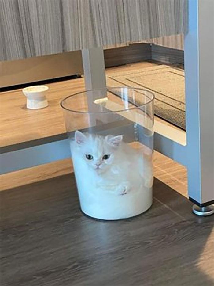 белый кот сидит в вазе
